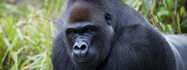 Picture of Tours & Safaris