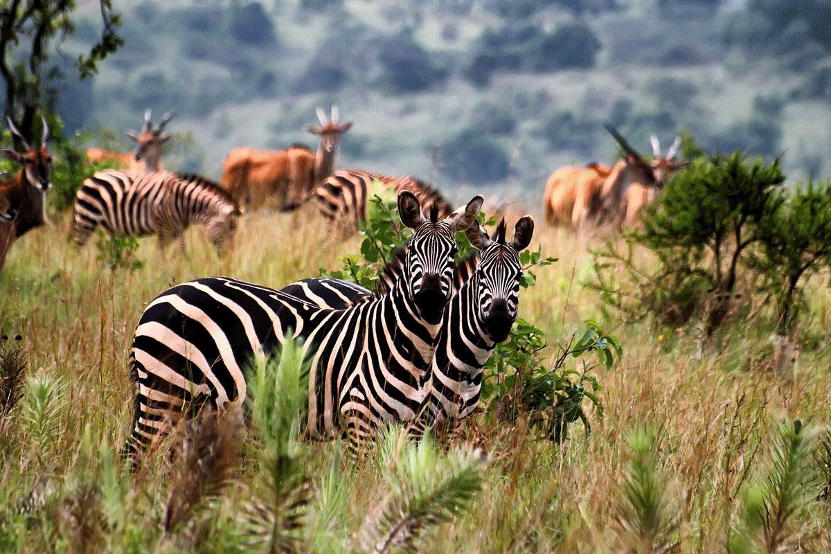 akagera national park, akagera park rwanda, african parks, boat safaris rwanda, game drive rwanda, boat rides, ruzizi
